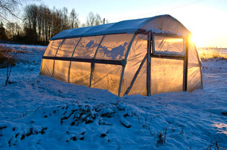 greenhouse hothouse on farm field on snow and winter morning  sunrise