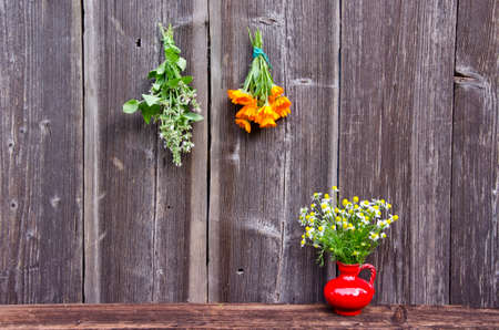 fresh medical herbs bunch on old wooden farm wall and red vase with chamomile