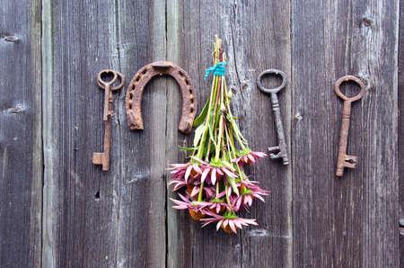 purpurea: Echinacea purpurea  medical coneflower bunch, rusty horseshoe and old key on wooden wall