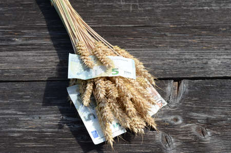 cash crop: ripe wheat ears and euro money banknote agriculture harvest concept