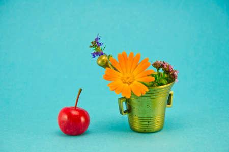 wild marjoram: medical flowers, red apple and vintage brass mortar on blue background