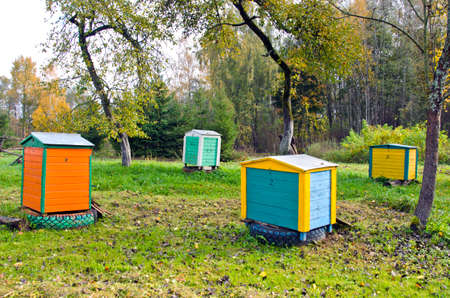 Honey colorful bee hives in autumnal apple old garden photo