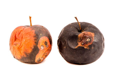 wastage: Two rotten apples fruit isolated on the white background Stock Photo