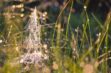 meadow  grass: difuminar roc�o final de verano prado de hierba con el fondo de tela de ara�a Foto de archivo