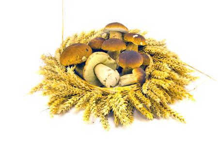 cep: wheat ears crown wreath and fresh mushroms cep boletus isolated on white Stock Photo