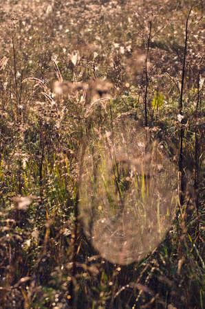 meadow  grass: falta de definici�n final de los prados y telara�as verano la naturaleza de fondo Foto de archivo
