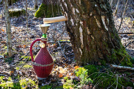 spigot: vintage wicker wine bottle and birch tree with spigot and sap drops Stock Photo