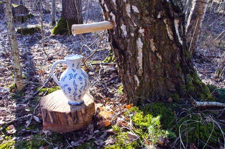 spigot: vintage ceramic pitcher jug and birch tree with spigot and sap drops