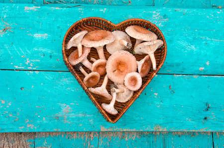 torminosus: edible mushrooms fungi (Lactarius torminosus) in heart form wicker basket
