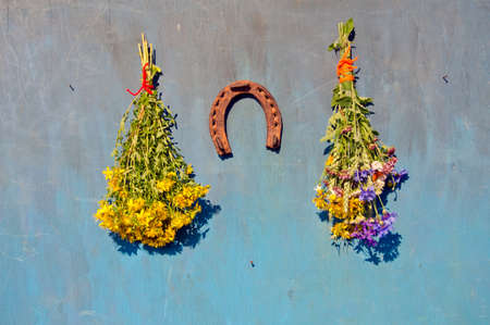 wort: st johns wort and various medical flowers bunch and rusty horseshoe on wall Stock Photo