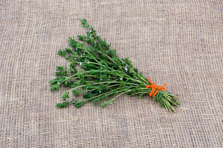 buch: Satureja tied savory medical spice herb with orange string on linen background