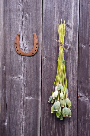 opiate: Bunch of big poppy heads and a horseshoe on wooden wall