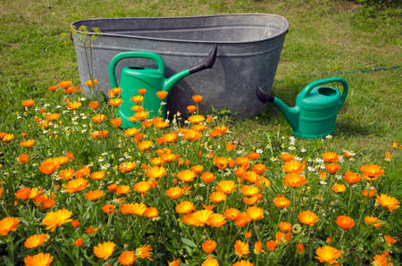 implements: Flowers and watering implements in the garden on summers day
