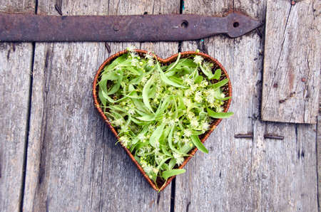 basswood: Heart shaped wicker basket full of fresh medical linden blossoms Stock Photo