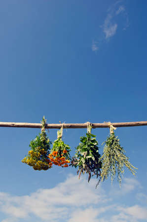 Mix various medical herbs bunch hanged to dry