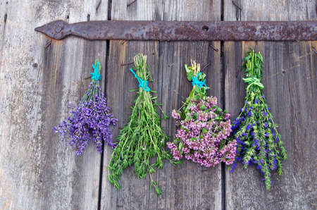 bundles: Bundles of fresh medical tied herbs hanging on the wooden antique door