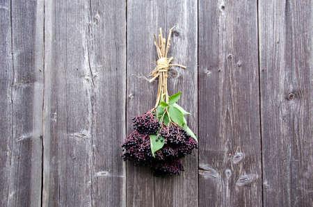 Bundle of elderberries hanging on wooden wall