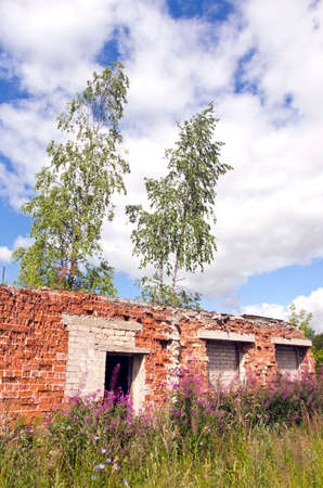 roofless: Desolate roofless and windowless brick house with birch trees growing through Stock Photo