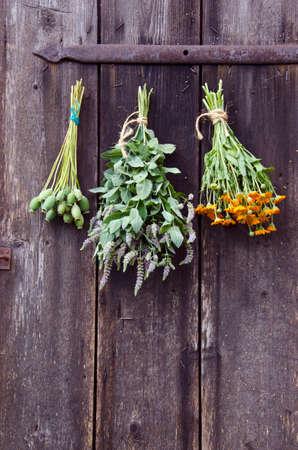 hanged: Bundles of medical herbs hanged on antique  wooden ranch door Stock Photo