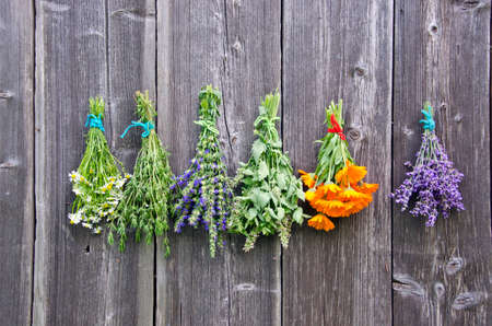 Bundles of various medical and spices herbs drying against grey rustic wooden wall Stockfoto