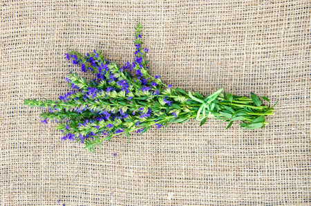 Bunch of hyssop on linen material covering table surface