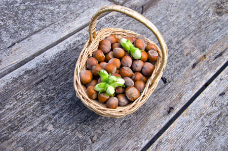 allergic ingredients: Green and brown hazelnuts in wicker basket placed on wooden grey table