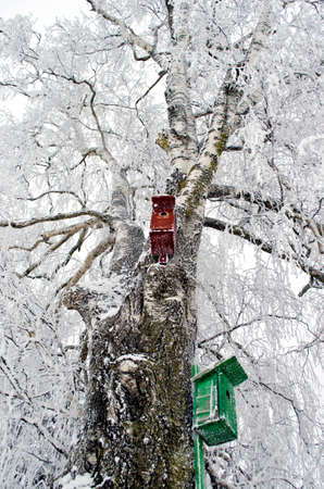populate: Two nesting boxes on frosted old birch tree in winter