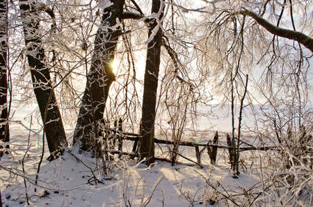 winter garden: Sunrise in derelict old winter  garden with wooden fence Stock Photo