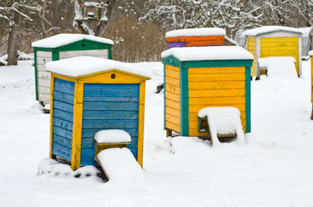 natural ice pastime: Colorful beehives in the apple tree garden in winter farm