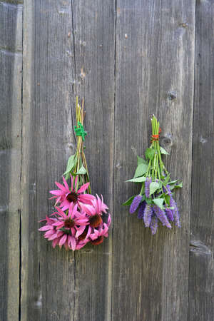 hyssop: medical herbs flowers bunch on old wooden wall, anise hyssop and coneflower