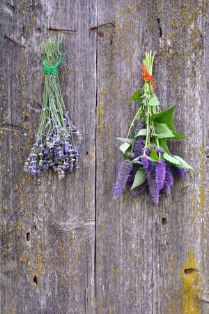 hyssop: anise hyssop and lavender bunch on old wooden farm barn wall