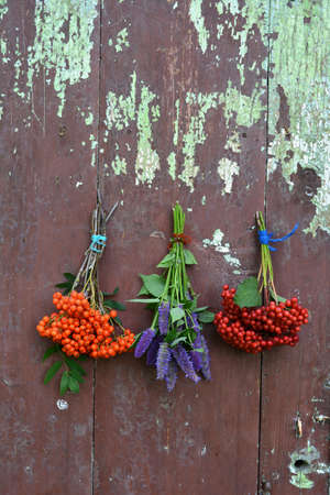 hyssop: rowan and viburnum berry and anise hyssop bunch on wooden door