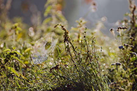 blur autumn grass nature background with spiderweb in morning light
