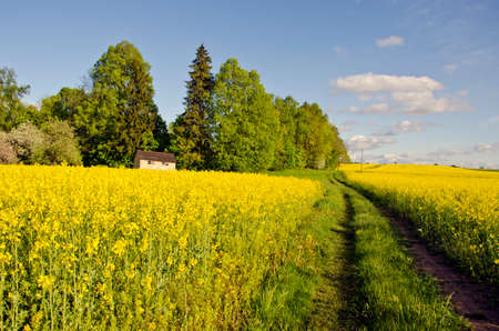 spring farmland with blossoming rapeseed fields, road and beehive Stock Photo
