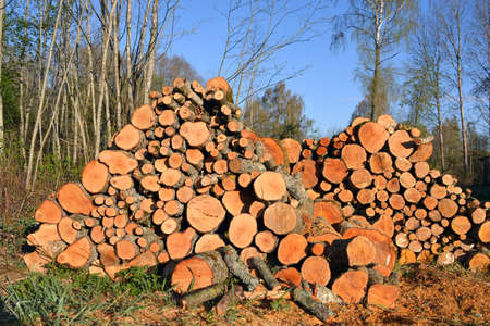 stack firewood logs on field near forest Stock Photo