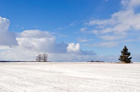 Winter landscape with snowy fields and alone fir tree
