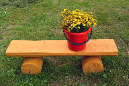 Red plastic bucket with wild medical St Johns wort flowers on wooden bench Stock Photo