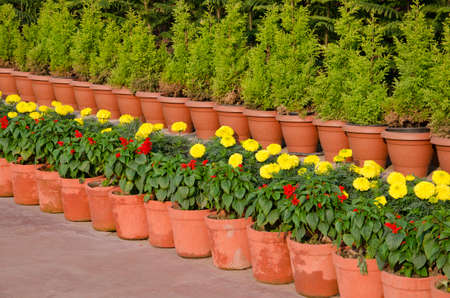 Flowerpots line with flowers and bushes in asia