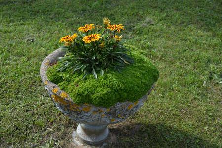 round old concrete stone vase with flowers, retro style
