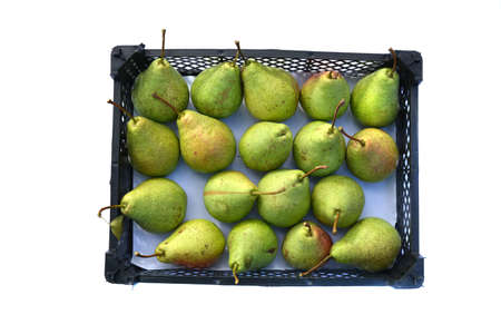 ripe organic pears harvest in a plastic box isolated