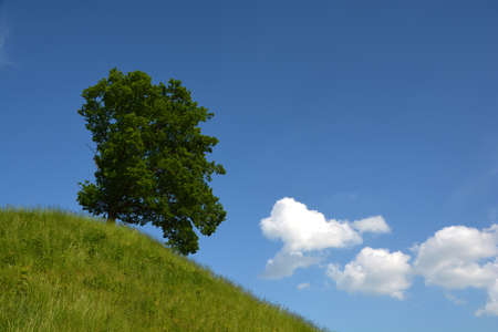 Single beautiful oak tree on green summer hill and white clouds
