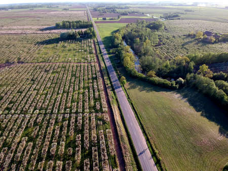 blooming apple trees in garden. aerial view of apple orchard Stockfoto