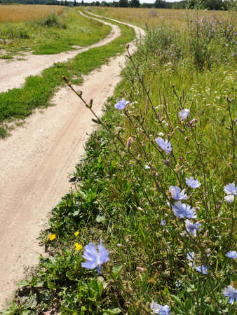 summer time empty rural gravel road and wild flowers
