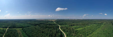 Summer forest landscape with gravel road, aerial view