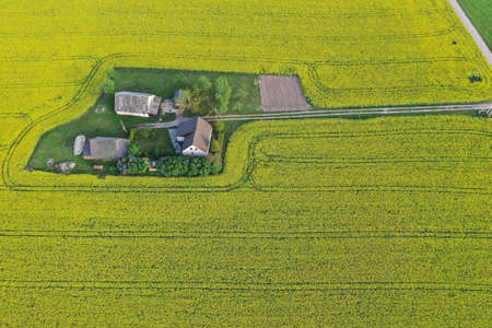 Aerial view to rapeseed fields with farm house and road, Lithuania