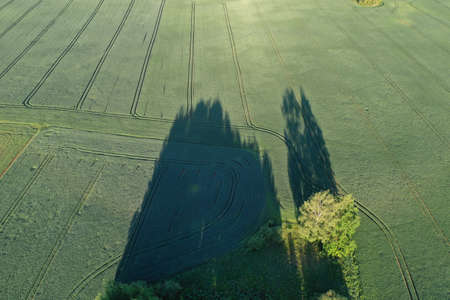 Morning shadows on green spring wheat field, aerial Stockfoto