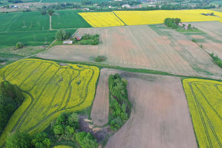 aerial view over very yellow rapeseed field during springtime Stockfoto