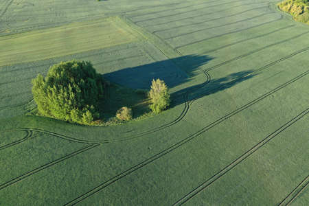 Aerial view of the large green field in spring season Stockfoto