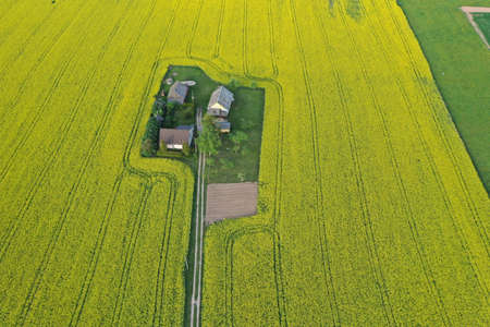 Homestead on yellow spring time rapeseed field, aerial