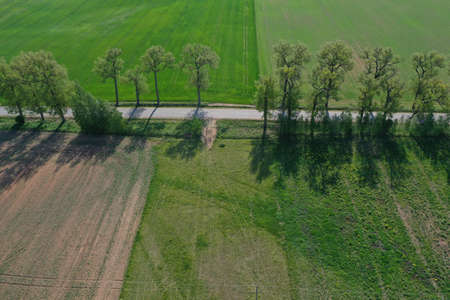 Rural road with old tree alley in nature park, aerial